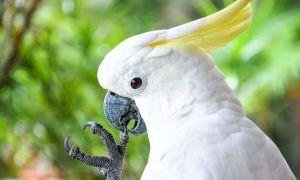 Приснился попугай во сне: толкование по соннику