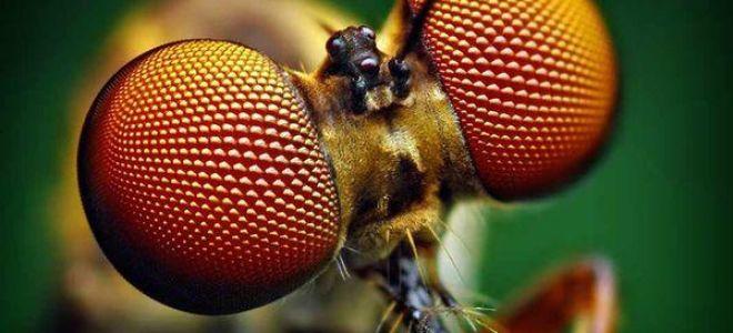Приснились насекомые во сне: толкование и значение по соннику