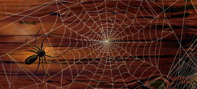 Что означает паутина во сне: правильное толкование и трактовка