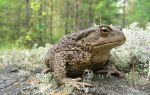 Приснилась жаба во сне — что означает по соннику