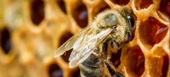 К чему снятся пчелы во сне — толкование и значение по соннику