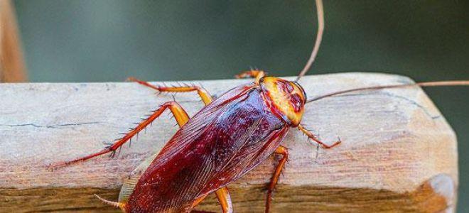 Тараканы во сне: к чему снятся, толкование сновидения