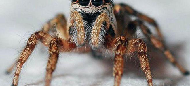 Приснился паук во сне: что это значит и как трактовать