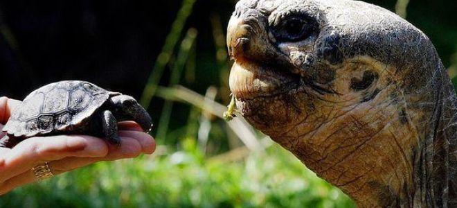Приснилась черепаха: толкование по соннику и значение сна