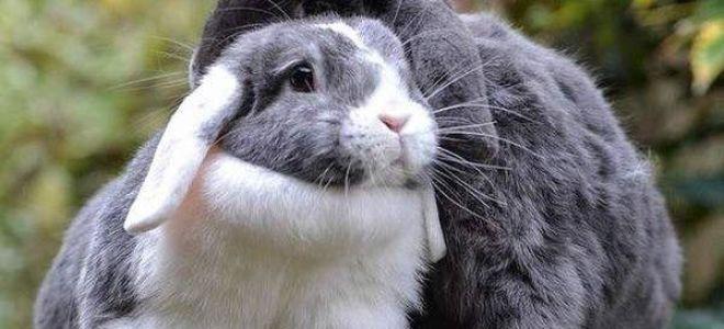Приснился кролик во сне — значение и толкование по соннику