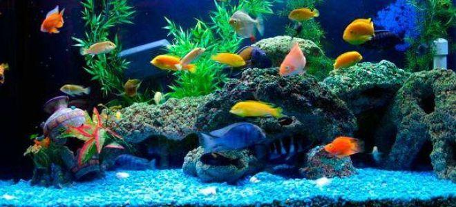 Сонник аквариум: толкование и значение сна