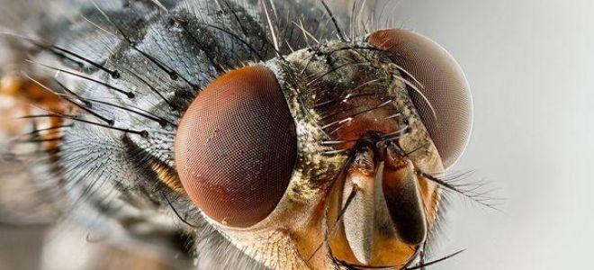 Сонник мухи: к чему снятся и что означает сновидение?
