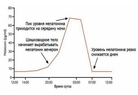график уровня мелатонина в организме