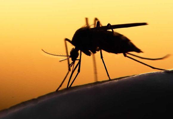 Ночь, комар