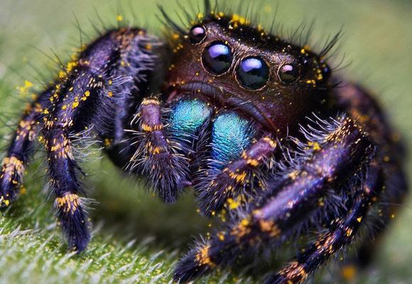 Разноцветный паук