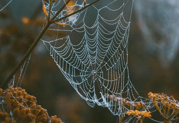 Паутина в природе