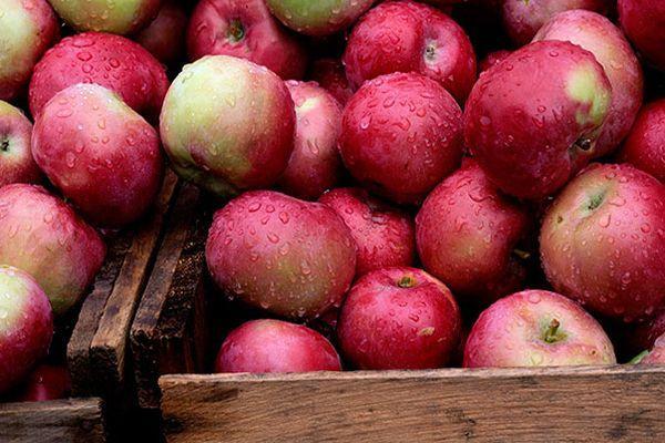 собранные плоды