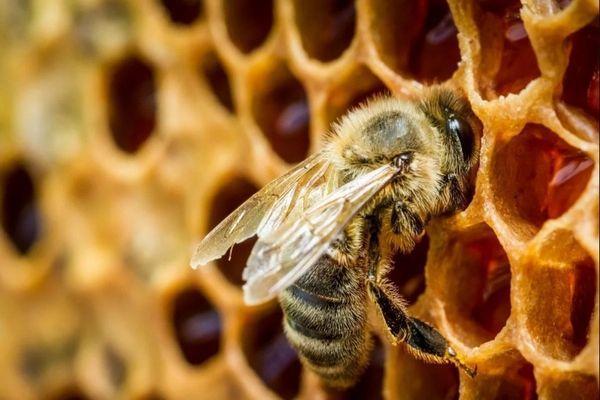 К чему снятся пчелы: толкование снов про пчел, к чему снятся укусы и рой,