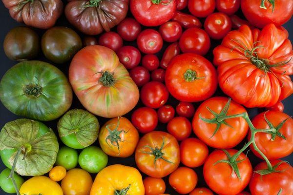 Сонник томаты красные на грядке у свекрови
