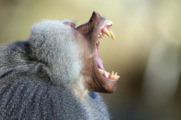 кусает обезьяна