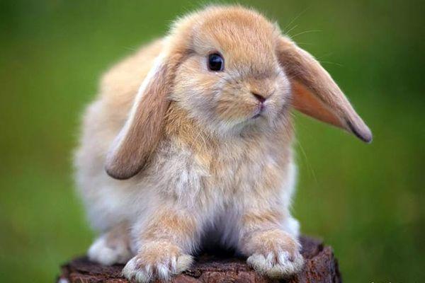 кролик на пеньке