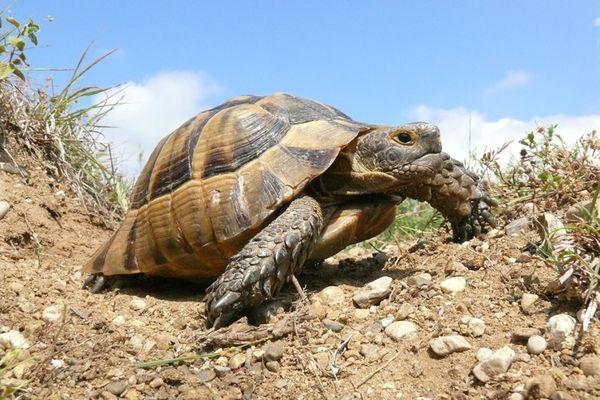 черепаха на горе