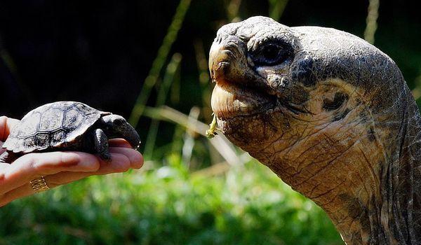 К чему снится черепаха - значение сна черепаха по соннику