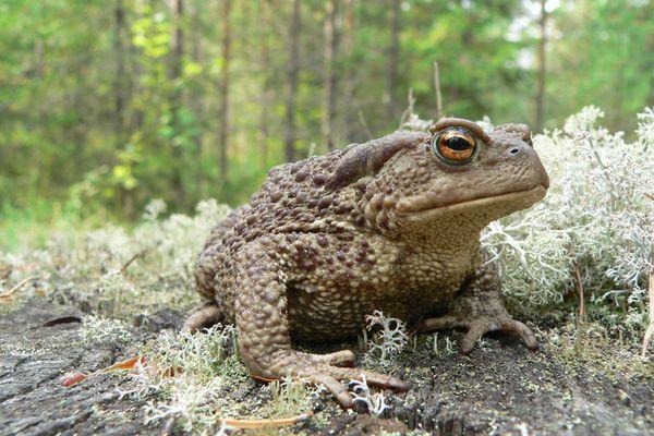 Приснились жабы к чему