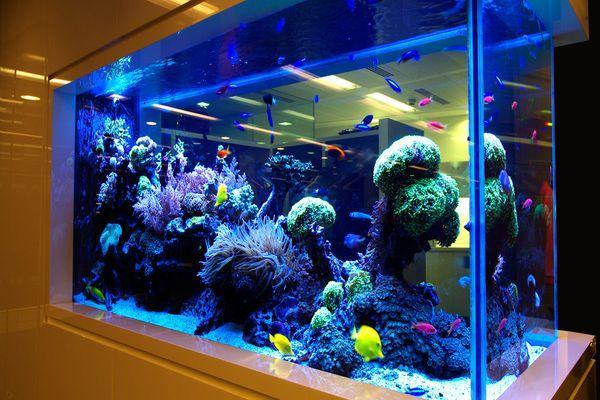 большой аквариум с подсветкой