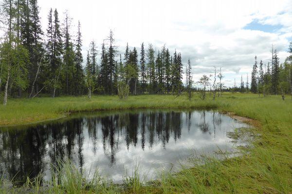 озеро на поляне