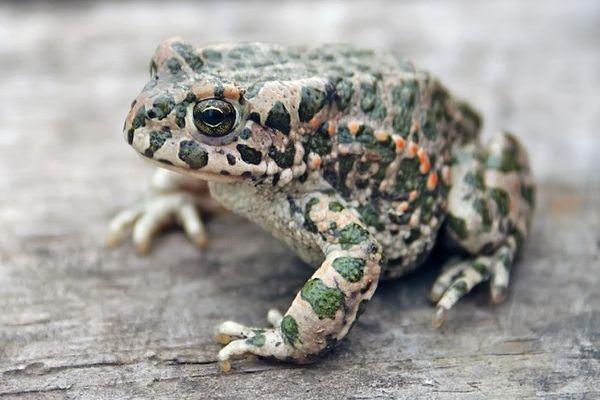 жаба на улице