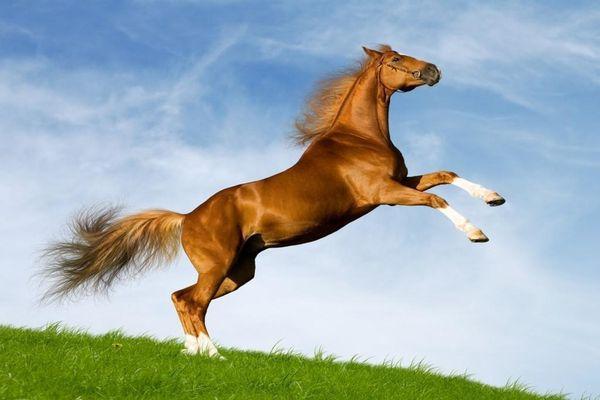 лошадь в прыжке